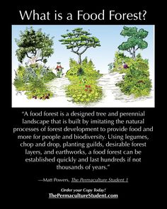 What's a Food Forest? http://www.thepermaculturestudent.com
