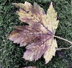 Rechtmatig Plant Leaves, Plants, Flora, Plant, Planting