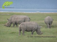 White rhinos at Lake Nakuru National Park, Kenya, OTA Safaris www.ota-responsibletravel.com
