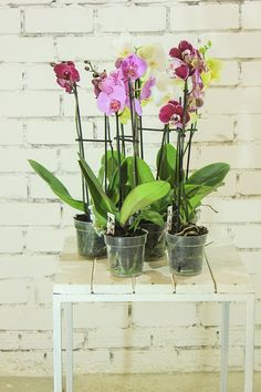 The post flowers plant orchid ornamental plant indoor plant houseplants flower many colors in a pot indoor home flower plants flora appeared first on PictStock : Stock Images, Photos and Vectors. Orchid Pot, Moth Orchid, Orchid Plants, Flower Plants, Indoor Plant Pots, Best Indoor Plants, Potted Plants, Orchid Leaves, Household Plants