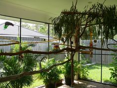 would love a planted avairy,but with parakeets,not a good idea,thinking of sectioning it off for the finches,and planting that end