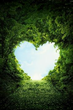 Science Discover Valentine& Day Hearts inspired by nature photos) - Have Some Fun Heart In Nature Heart Art I Love Heart Happy Heart Grateful Heart Happy Life Love Symbols Love Is All Belle Photo Heart In Nature, Heart Art, Beautiful Places, Beautiful Pictures, Beautiful Heart Pics, Beautiful Sunset, I Love Heart, Happy Heart, Grateful Heart