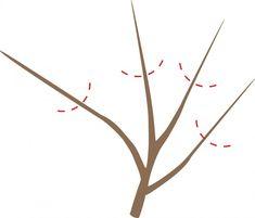 Letný rez ovocných stromov jednoducho v troch krokoch Incense
