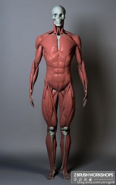 Body structure and high modulus reference