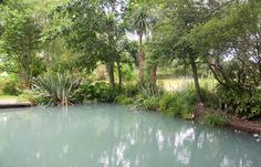 My irrigation pond, with a path running alongside the water under the trees. And some garden gnomes - oops.