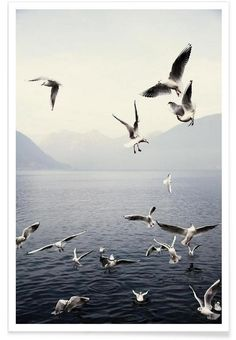 https://www.juniqe.de/seagulls-premium-poster-portrait-1426398.html