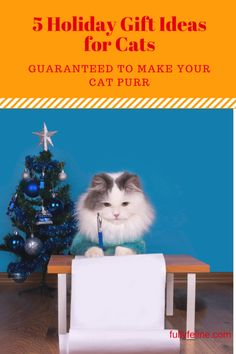 These holiday gift ideas for cats have been recommended by my cat Marty and several of my cat clients. #cat products #christmas for cats