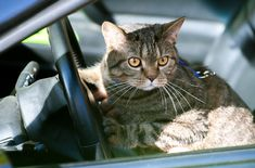 Have you ever taken your cat on a road trip? If you're planning on taking your cat with you on vaca this summer, here are some tips to remember.