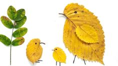 Create pictures using the natural shapes and colors of leaves.