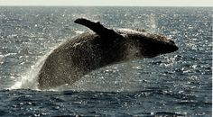 To settle litigation brought by environmental groups, the Navy has agreed to curtail use of sonar and underwater explosives during training in key areas for marine mammals off Southern California and Hawaii.