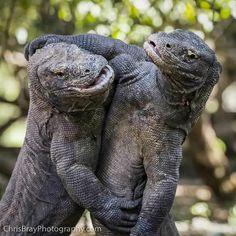 Are they hugging or fighting? Млекопитающие, Милые Животные, Экзотические Домашние Животные, Странные Животные, Змеи, Природа, Дикие Животные, Gatos, Гиены