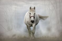 A White Horse In Ireland