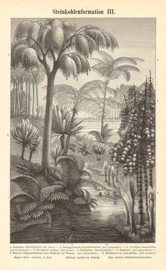 1897 Carboniferous Landscape Earliest Land by CabinetOfTreasures