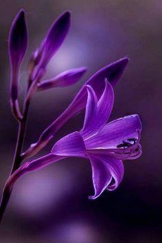# Beauty In Purple Purple Love, All Things Purple, Purple Rain, Shades Of Purple, Exotic Flowers, Amazing Flowers, Pretty Flowers, Purple Flowers, Beautiful Flowers Wallpapers