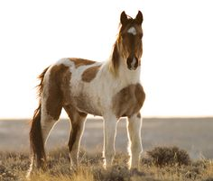 Beautiful Wild Mustang