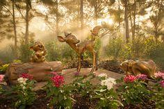 Disney Golden Oak
