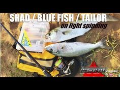 ASFN Fishing Vlog - Shad / Blue Fish /Tailor on Light Spinning - YouTube Fresh Water, Spinning, South Africa, Fishing, Channel, Blue, Hand Spinning, Peaches