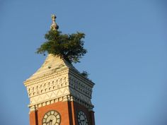 Greensburg, Indiana Courthouse   Tree growing out of roof, this is true. My coworker's family lives there