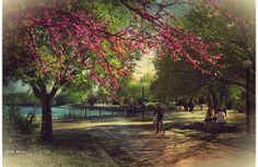 Spring in Ioannina (photo: Nak Kan)