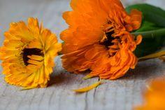 To zioło wręcz jest jednym z obowiązkowych ziół w naszej ziołowej apteczce, zobacz film i dowiedz się więcej o jego zastosowaniu. Plants, Film, Movie, Film Stock, Cinema, Plant, Films, Planets