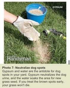 how to fix dog spots in grass