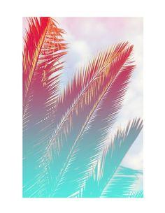 Tropical palms :)