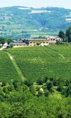Wine? Check. Italy? Check. Fab food? Check. A wine tasting weekend in Piemonte, Italy with close friends? Absolutely!