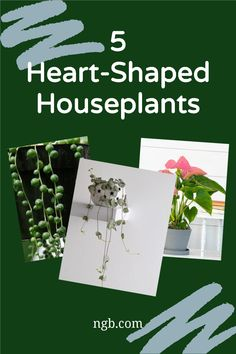 Show your love and appreciation to someone special with Heart-Shaped Houseplants. Easy and fun to grow for all! Planting Succulents, Garden Plants, Indoor Plants, String Of Pearls, Bedroom Night Stands, Container Gardening, Indoor Gardening, Bright Flowers, Hanging Baskets