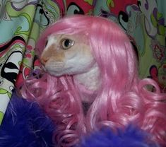 My Favorite Cat in a Wig