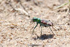 Bug by Sergey Vecherok on 500px