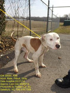 AXLE HAS BEEN GIVEN A 24 HOUR EXTENSION! HE MUST BE OUT BY 4PM TOMORROW, TUESDAY, 3/4/14   ID# 58690 - Axel is a handsome male Pitbull who was brought in as a stray. This poor guy has had a rough go at life based on the scars on his face and body. Friendly with people.  Very food driven.  Adoption fee $70 - goes towards spay and 1 yr rabies vaccine. Rowan Cty Shelter (Salisbury, NC) 704-216-7768/7770/7771…