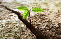 Problema não é o problema, mas como olhar para problemas que muda tudo. Essa capacidade chama-se resiliência.