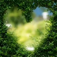 Islamic Nasheed, Allah Calligraphy, Islamic Videos, Homeopathic Remedies, Prophet Muhammad, Holy Quran, Beautiful Flowers, Herbs, Stylish Hijab