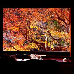 Autumn view through the  window  at Yojiya Cafe in Kyoto Japan via flickr