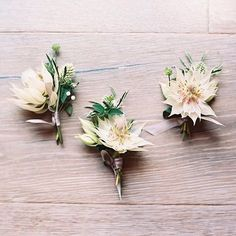 Blushing bride protea - the perfect, delicate bloom that just steals the show in these boutonnieres. Designed by @plentyofpetals, photo by @ashleykelemen. #boutonniere #featuremeoncewed