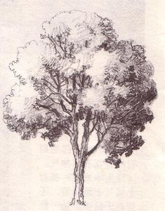 Just draw! (The Shape, Skeleton and Foliage of Thirty Two Species of Trees For the Use of Painting and Drawing) Oak Tree Drawings, Tree Drawings Pencil, Landscape Pencil Drawings, Pencil Trees, Pencil Sketch Drawing, Landscape Sketch, Plant Sketches, Tree Sketches, Art Drawings Sketches