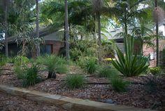 Portfolio: Gordon Garden Design - All For Garden Australian Garden Design, Australian Native Garden, Native Australians, Native Plants, Garden Plants, Garden Landscaping, Habitats, Balmain, Landscape Design
