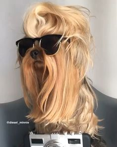Excellent funny dogs tips are offered on our web pages. look at this and you wont be sorry you did. Cute Dogs Breeds, Puppy Breeds, Funny Dog Videos, Funny Dogs, Perros Yorkshire Terrier, Cute Puppies, Dogs And Puppies, Yorkie Haircuts, Yorkie Puppy