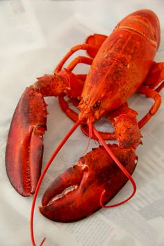 How To Eat A Whole Lobster Love Frozen Recipes Seafood