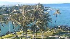 Enjoy amazing scenes with our live EarthCam from the four-acre saltwater lagoon at Hilton Waikoloa Village on the Island of Hawaii. You might spot green sea turtles and tropical fish that swim in daily from the Pacific Ocean. Waikoloa Hawaii, Hilton Waikoloa Village, Live In The Now, Tropical Fish, Pacific Ocean, Acre, Earth, Island, Amazing