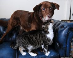 """Seeing eye cat"" guides blind dog through life"