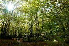 Los bosques templados son aquellos que se encuentran en zonas de climas templados. Se encuentran sobre todo en el hemisferio norte