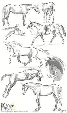Draw Horses more horse studies by kalambo. Horse Drawings, Pencil Art Drawings, Animal Drawings, Drawing Sketches, Sketching, Drawing Poses, Painting & Drawing, Drawing Ideas, Arte Equina