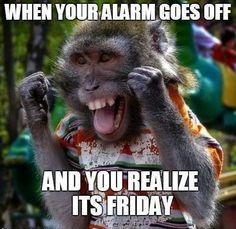 The good doctor Lando Calrusian Funny Animal Memes, Funny Animal Pictures, Funny Dogs, Funny Animals, Funny Quotes, Funny Memes, Animal Pics, Animal Humor, Cat Memes