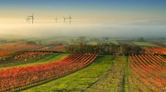 Wine Country in the mist - null
