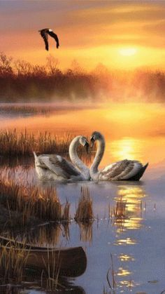 Nature Animation page Nature Animation Swan Love, Beautiful Swan, Beautiful Birds, Gif Pictures, Nature Pictures, Beautiful Pictures, Swans, Animation, Image Nature