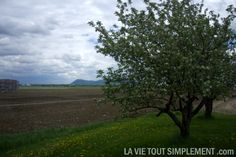 Potager Mont-Rouge - Montérégie. Les fraises du Québec sur www.lavietoutsimplement.com.