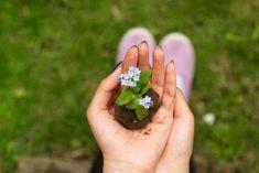Správne hnojenie pre lepšiu úrodu Audre Lorde, Blog Names, Beltane, Eco Friendly House, Save The Bees, Simple Living, Personal Development, Creative, Bloom