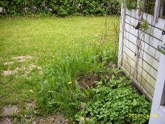 Puutarhaunelmia ja rivitaloelämää: Puutarhaunelmia