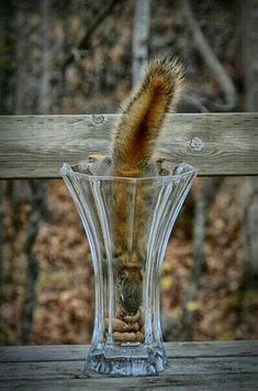 The squirrel finally bloomed😆 Animals And Pets, Baby Animals, Funny Animals, Cute Animals, Hamsters, Rodents, Woodland Creatures, Woodland Animals, Cute Squirrel